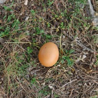 Come l'uovo sodo